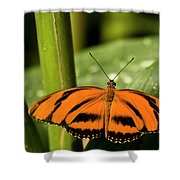 A Banded Orange Heliconian Butterfly Shower Curtain