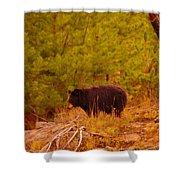 A Black Bear Shower Curtain