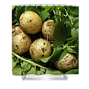 A Bunch Of Fresh New Potatoes Shower Curtain