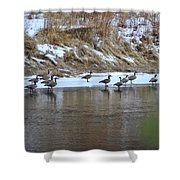 A Chilly Swim Shower Curtain