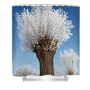 A Frosted Willow On A Very Cold And Bright Winter Day Shower Curtain
