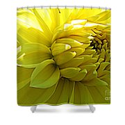 Golden Dahlia Shower Curtain