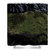 A Moss Covered Stone Inside The National Orchid Garden In Singapore Shower Curtain