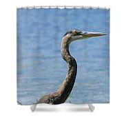 A Portrait Of A Great Blue Heron  Shower Curtain