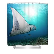 A Reef Manta Ray  Manta Alfredi Shower Curtain