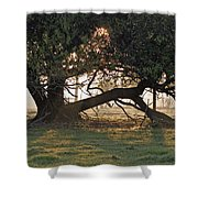 A Tree In Mississippi Shower Curtain