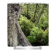 A Young Boy Climbs In Yosemite, June Shower Curtain
