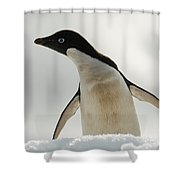 Adelie Penguin Shower Curtain