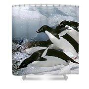 Adelie Penguins Shower Curtain
