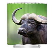 African Buffalo Portrait Shower Curtain