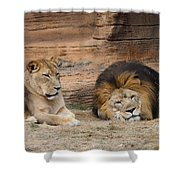 African Lion Couple 3 Shower Curtain