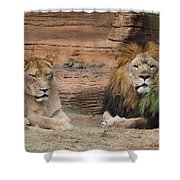 African Lion Couple Shower Curtain