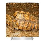 African Spur Thigh Tortoise Shower Curtain