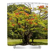 African Tulip Tree Shower Curtain