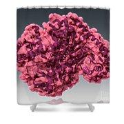 Alanine Transaminase, Molecular Model Shower Curtain