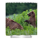 Alaska2010.-brown Beers On The Kenai Shower Curtain