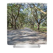 Lowcountry Allee Of Oaks Shower Curtain
