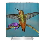Allens Hummingbird Male Shower Curtain