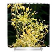 Allium Flavum Or Fireworks Allium Shower Curtain