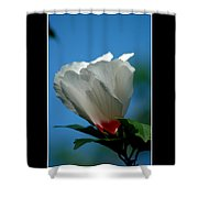 Althea Flower Shower Curtain