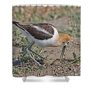 American Avocet And Eggs Shower Curtain