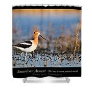 American Avocet Shower Curtain