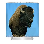 American Bison Bull Shower Curtain