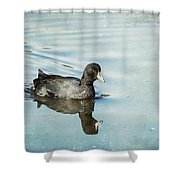 American Coot Shower Curtain