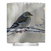 American Goldfinch 1 Shower Curtain