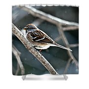 American Tree Sparrow  Shower Curtain