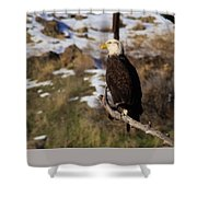 An Eagle Perched   Shower Curtain