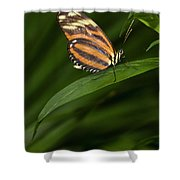An Isabella Butterfly Eueides Isabella Shower Curtain