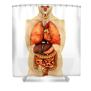 Anatomy Of Human Body Showing Whole Shower Curtain by Stocktrek Images