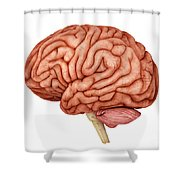 Anatomy Of Human Brain, Side View Shower Curtain