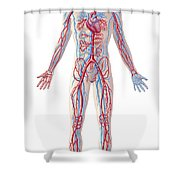 Anatomy Of Human Circulatory System Shower Curtain