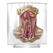 Anatomy Of Human Hyoid Bone Shower Curtain