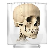 Anatomy Of Human Skull, Side View Shower Curtain by Leonello Calvetti