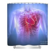 Anatomy Of The Chest Shower Curtain