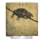 Ancient Turtle Shower Curtain