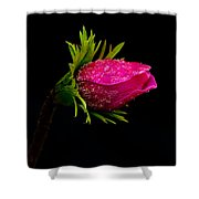 Anemone Flower On Black Shower Curtain
