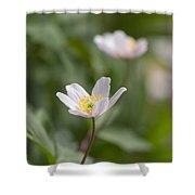 Anemone Windflower Shower Curtain