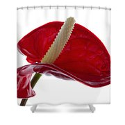 Anthurium Shower Curtain