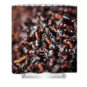 Ants Shower Curtain