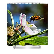 Apple Blossom And Honey Bee Shower Curtain