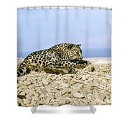 Arabian Leopard Panthera Pardus 1 Shower Curtain