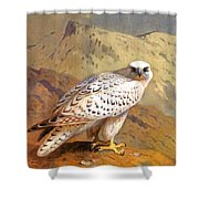 Greenland Falcon Shower Curtain
