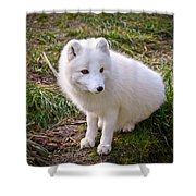 Arctic White Fox Shower Curtain
