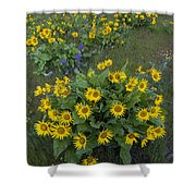 Arrowleaf Balsamroot And Lupine Shower Curtain