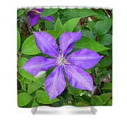Ascotensis Shower Curtain