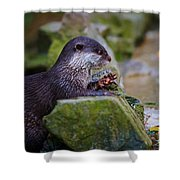 Asian Small Clawed Otter Shower Curtain